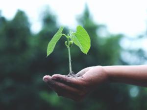 Agenda 2030 obiettivi: Top Partners sceglie Bee Happily